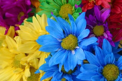 flowermasthead.jpg