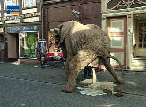 pissing_elephant.jpg