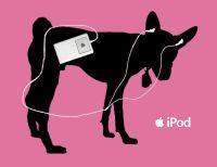 Burro e Jegue com Ipod