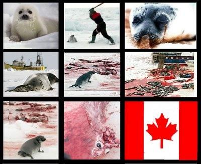 Vista focas, elas nao sentemdores!