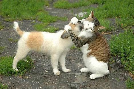 gato abraçando cachorro