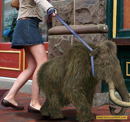 levando o mamute para passear_12