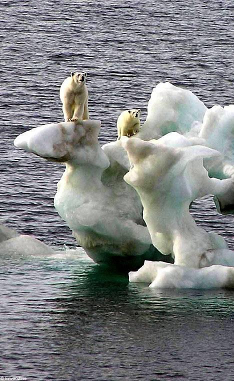A extinção dos ursos polares