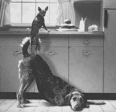 Cachorros humanitários