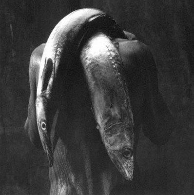 O pescador brasileiro de Verger