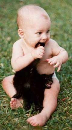 o gato e o bebê