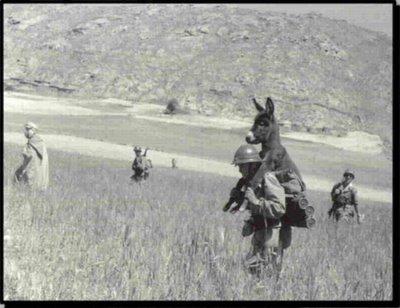 guerra de burros